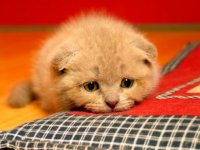 30-308152_sad-cat-wallpaper-sad-and-disappointed-meme[1].jpg